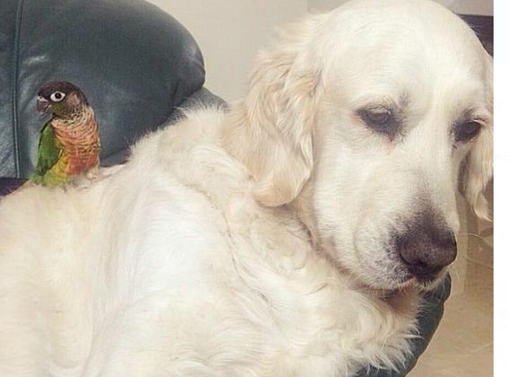 רצח המוני של כלבים וחיות אחרות באשקלון: 9 קורבנות כבר נספרו
